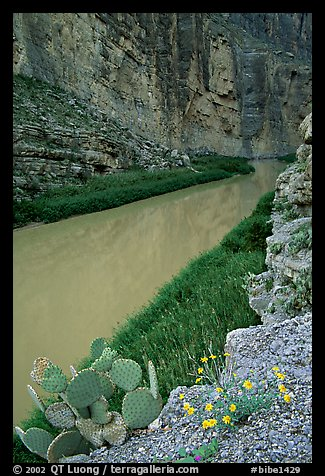 Flowers, cactus, and Rio Grande in Santa Elena Canyon. Big Bend National Park (color)