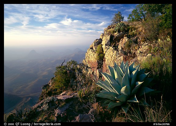 Agave and cliff, South Rim, morning. Big Bend National Park (color)