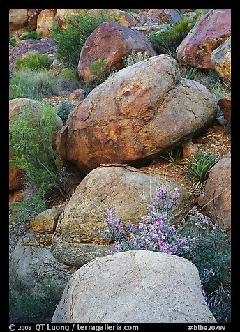 Boulders and wildflowers. Big Bend National Park (color)