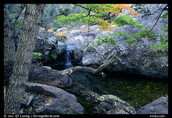 Springs in the Chisos Mountains. Big Bend National Park (color)