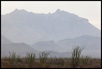 Ocotillo and Chisos Mountains. Big Bend National Park, Texas, USA. (color)