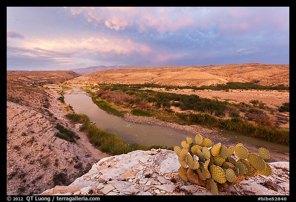 Cactus above Rio Grande River. Big Bend National Park (color)