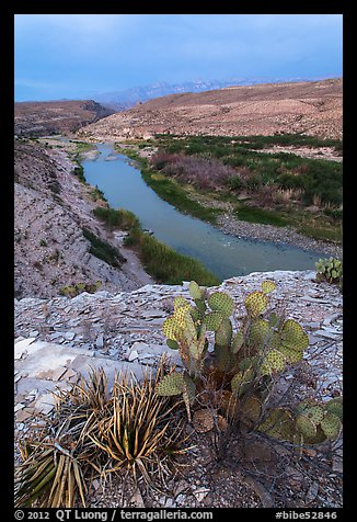 Cactus and Rio Grande Wild and Scenic River. Big Bend National Park (color)