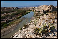 Cactus and Rio Grande River, morning. Big Bend National Park ( color)