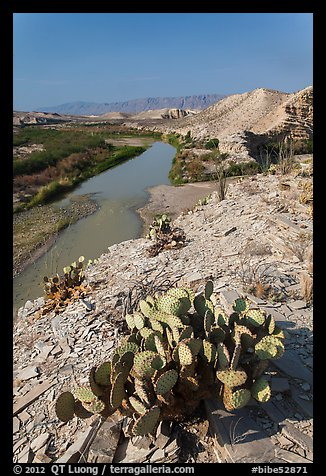 Cactus, Ocotillo, Rio Grande River, morning. Big Bend National Park (color)