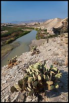 Cactus, Ocotillo, Rio Grande River, morning. Big Bend National Park, Texas, USA.