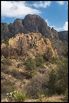 Pine trees, Chisos Mountains. Big Bend National Park ( color)