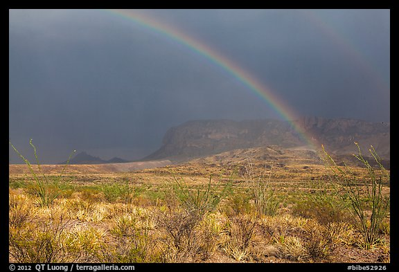 Double rainbow and ocotillos. Big Bend National Park (color)