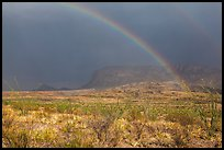 Double rainbow and ocotillos. Big Bend National Park ( color)