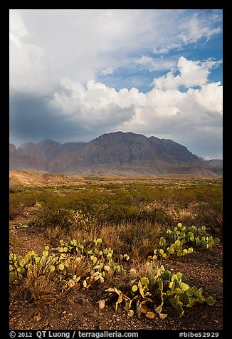 Cactus, Chisos Mountains, and clearing storm. Big Bend National Park (color)