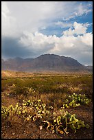 Cactus, Chisos Mountains, and clearing storm. Big Bend National Park ( color)