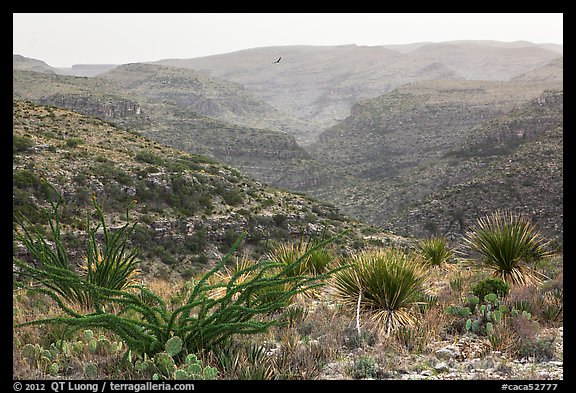Rattlesnake Canyon. Carlsbad Caverns National Park (color)