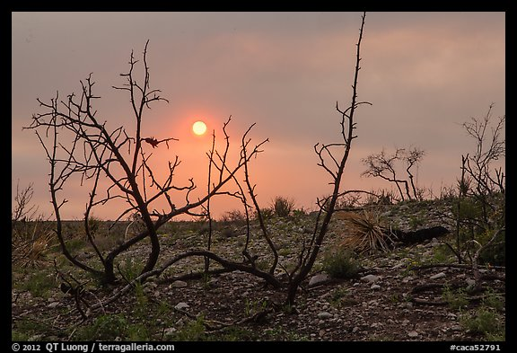 Sun through wildfire smoke and burned shrubs. Carlsbad Caverns National Park (color)