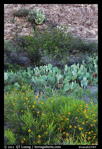Wildflowers, cactus, shrubs, and rock. Carlsbad Caverns National Park (color)