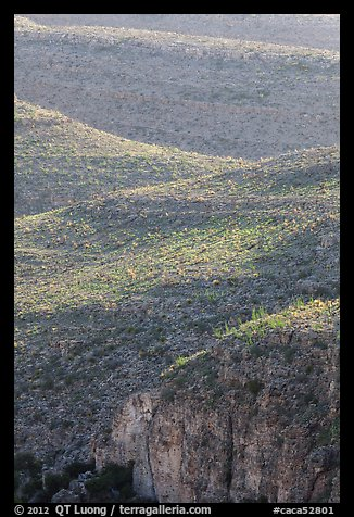 Ridges with desert vegetation. Carlsbad Caverns National Park (color)