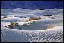 Mesquite Sand Dunes, morning. Death Valley National Park, California, USA.