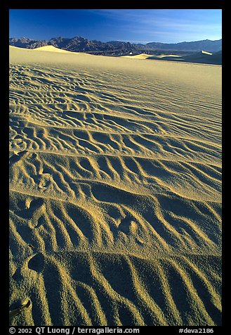 Ripples on Mesquite Sand Dunes, early morning. Death Valley National Park (color)