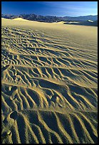 Ripples on Mesquite Sand Dunes, early morning. Death Valley National Park, California, USA. (color)