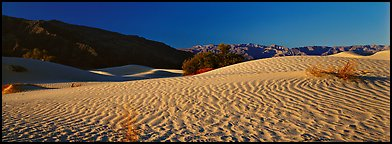 Desert landscape with sand ripples, Mesquite dunes. Death Valley National Park (Panoramic color)