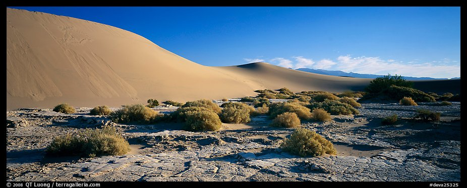 Desert landscape with mud slabs, bushes, and sand dunes. Death Valley National Park (color)