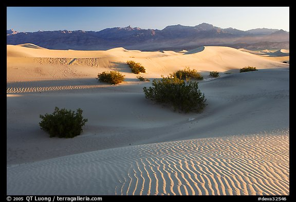 Sand dunes and mesquite bushes, sunrise. Death Valley National Park (color)