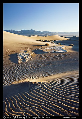 Depression in dunes with sand ripples, Mesquite Sand Dunes, early morning. Death Valley National Park (color)