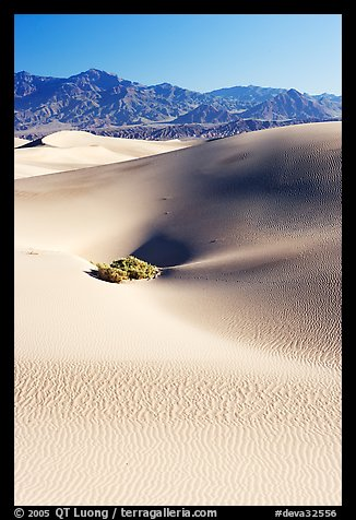 Depression in sand dunes, morning. Death Valley National Park (color)