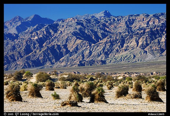Devil's cornfield and Armagosa Mountains. Death Valley National Park (color)