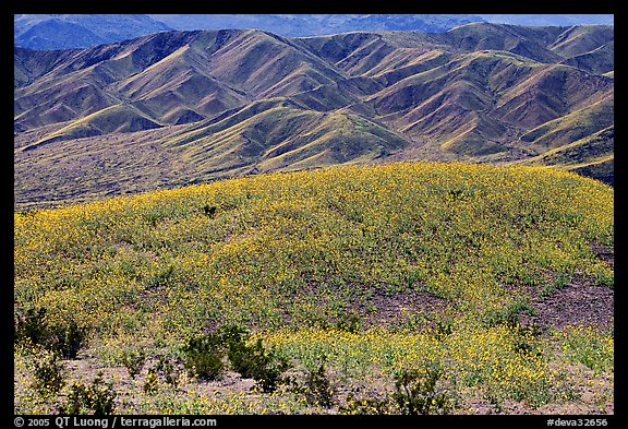 Butte and Owlshead Mountains, dotted with wildflowers. Death Valley National Park (color)