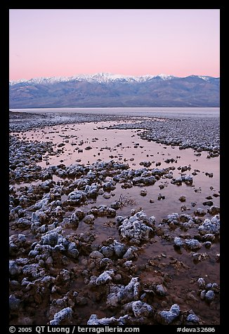 Recently emerged salt pools, Badwater, dawn. Death Valley National Park, California, USA.