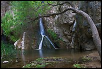 Desert Oasis with Darwin Falls. Death Valley National Park ( color)