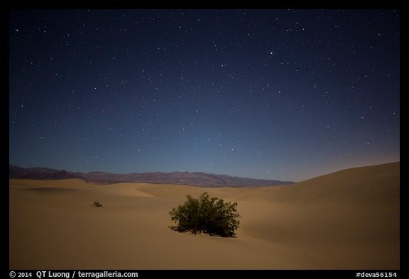 Mesquite bush in sand dunes at night. Death Valley National Park (color)