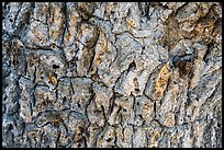 Close-up of Joshua tree bark. Death Valley National Park ( color)