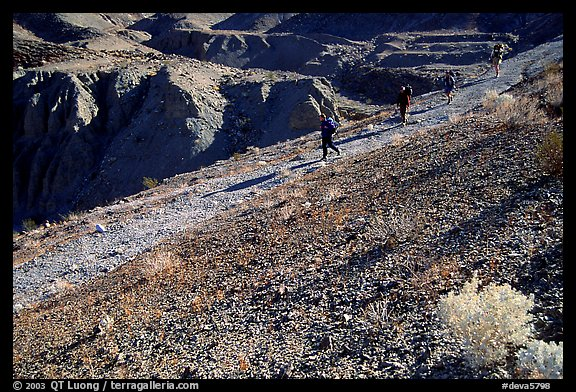 Hikers on slopes above side canyon. Death Valley National Park (color)