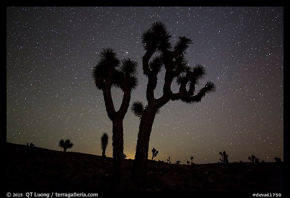 Joshua Trees and starry sky, Lee Flat. Death Valley National Park (color)