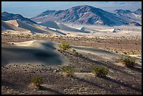 Shrubs and sand, Ibex Dunes. Death Valley National Park ( color)