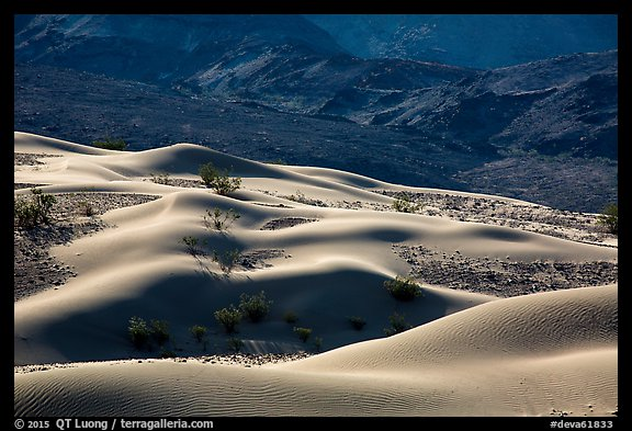 Undulating Ibex dune field. Death Valley National Park (color)