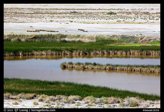 Saragota Spring ponds and salt pan. Death Valley National Park (color)