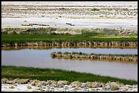 Saragota Spring ponds and salt pan. Death Valley National Park ( color)