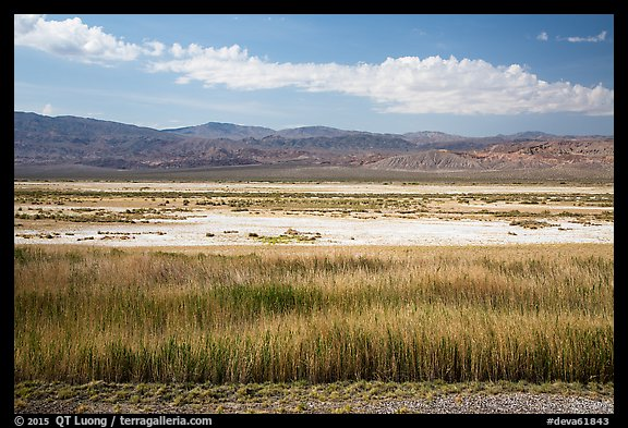 Salt Pan and riparian area, Saragota Springs. Death Valley National Park (color)