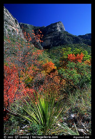 McKittrick Canyon in the fall. Guadalupe Mountains National Park (color)