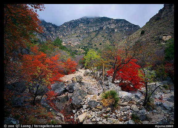 Pine Spring Canyon in fall. Guadalupe Mountains National Park (color)