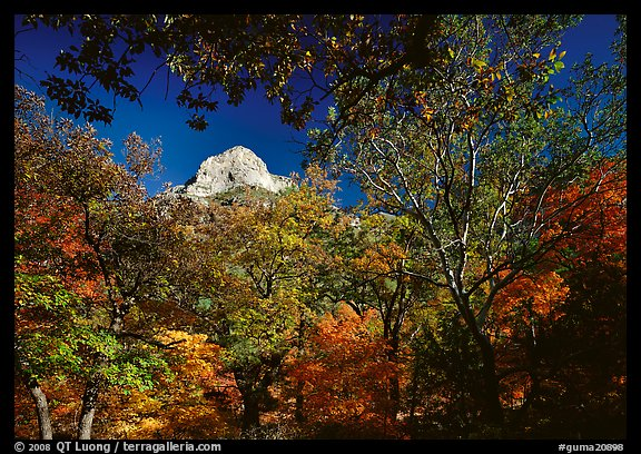 Limestone Peak framed by trees in fall colors in McKitterick Canyon. Guadalupe Mountains National Park (color)