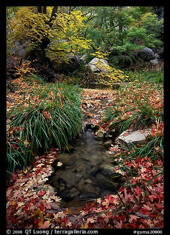 Stream in fall, Smith Springs. Guadalupe Mountains National Park (color)