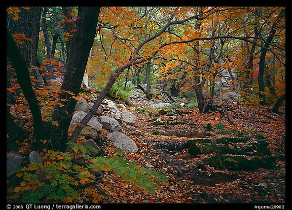 Creek and fall colors, Smith Springs. Guadalupe Mountains National Park (color)
