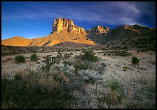 Desert vegetation and El Capitan from Guadalupe pass, morning. Guadalupe Mountains National Park, Texas, USA. (color)