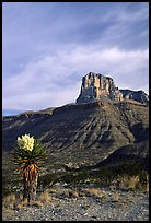 Yucca and El Capitan. Guadalupe Mountains National Park, Texas, USA. (color)