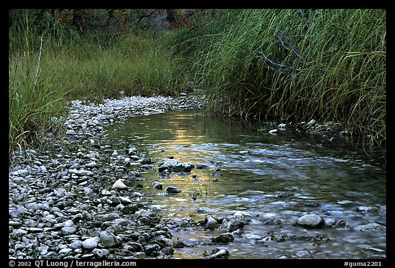 The only year-long stream in the park, McKittrick Canyon. Guadalupe Mountains National Park (color)