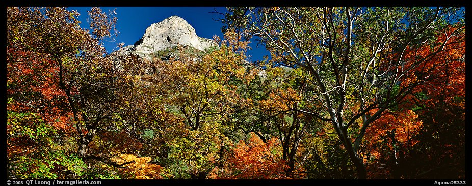 Forest in autumn color and rocky peak. Guadalupe Mountains National Park (color)