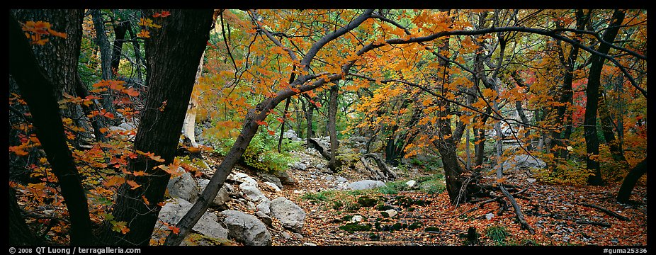 Creek in autumn. Guadalupe Mountains National Park (color)